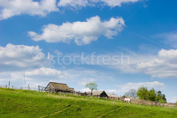 Wiejskie sceny wiosną konia niebo trawy budowy Zdjęcia stock © naumoid