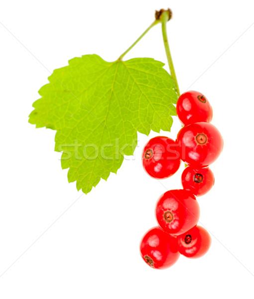 Redcurrant berries Stock photo © naumoid