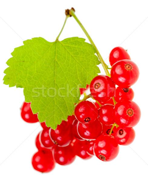 Vörös ribiszke bogyók levél fehér gyümölcs csoport Stock fotó © naumoid