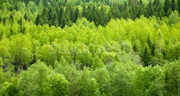 Orman karışık panoramik görmek ağaç Stok fotoğraf © naumoid