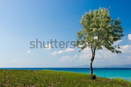 ストックフォト: オリーブの木 · ギリシャ語 · ビーチ · 空 · 海