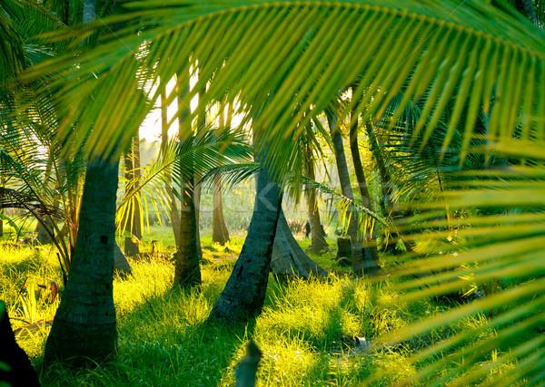 Sera sole misty foresta pluviale luce del sole raggi Foto d'archivio © naumoid