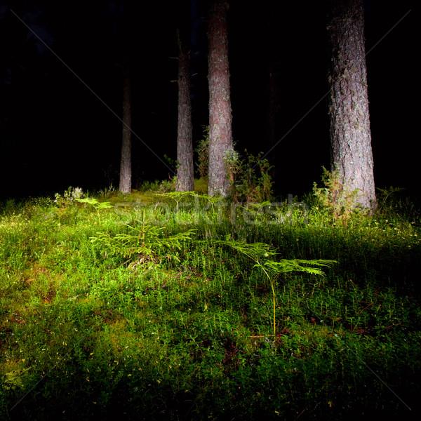 Night forest Stock photo © naumoid