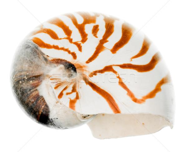 Nautilus shell Stock photo © naumoid