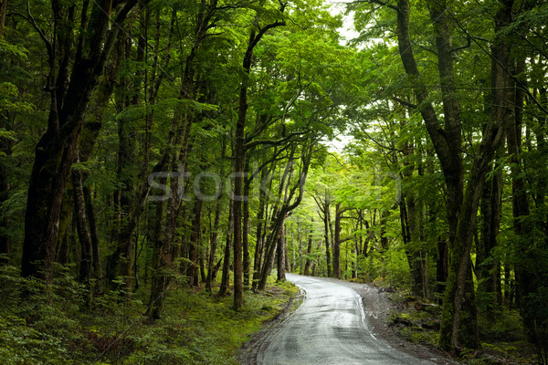 Rainforest road Stock photo © naumoid