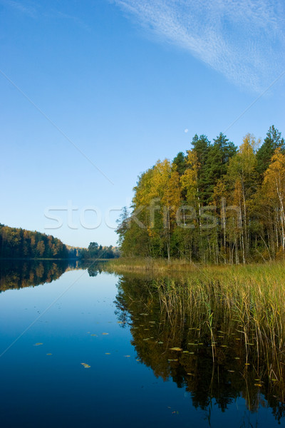 Morning on a quiet forest lake Stock photo © naumoid
