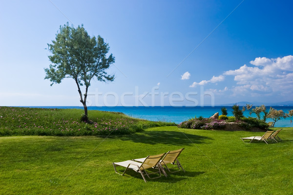 Olive tree and lounge chairs Stock photo © naumoid