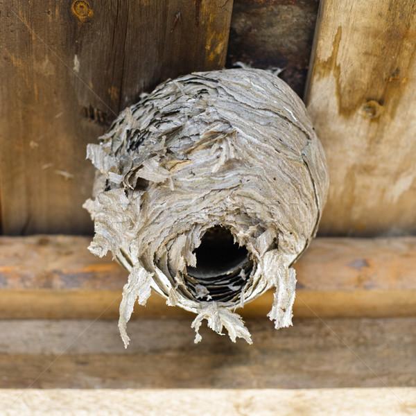 Nest bevestigd home bee gevaar koepel Stockfoto © naumoid