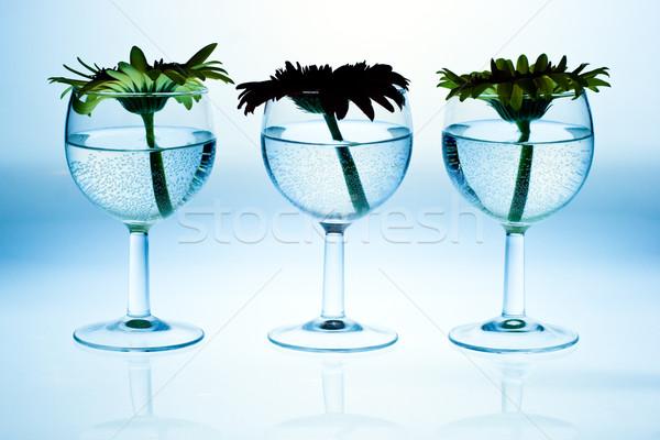 Borospoharak virágok víz virág bor kék Stock fotó © naumoid
