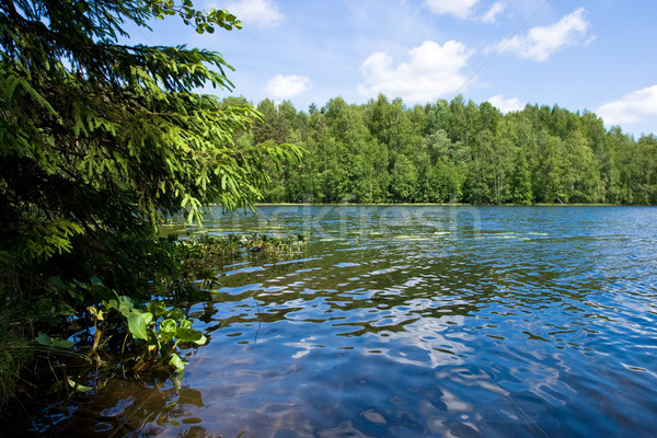 Summer at the forest lake Stock photo © naumoid