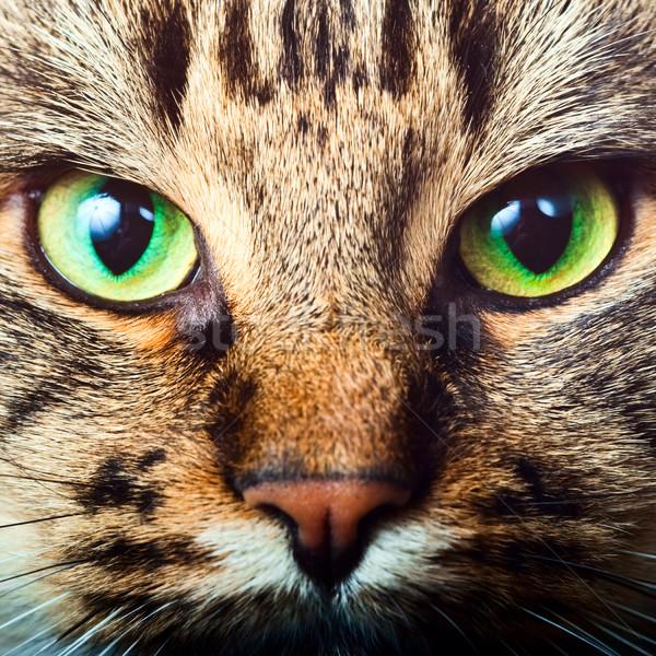 Macska közelkép portré arc haj zöld Stock fotó © naumoid
