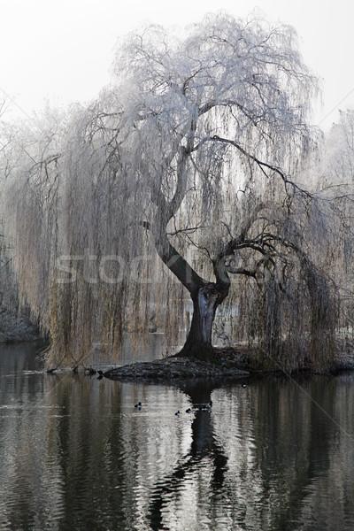 Frostig Baum bedeckt Frost Wasser Insel Stock foto © ndjohnston