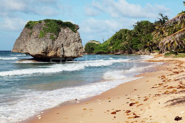 Barbados Surfer surfen Küste Insel Stock foto © ndjohnston