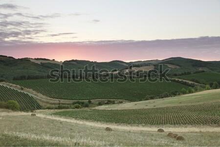 Francia puesta de sol hierba país vid colina Foto stock © ndjohnston