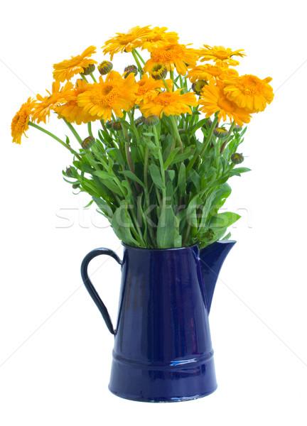 Calendula flowers in pot Stock photo © neirfy