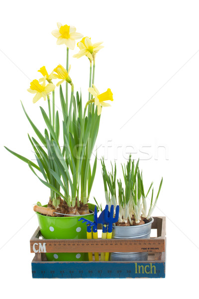 Gardening tools with flower pots Stock photo © neirfy