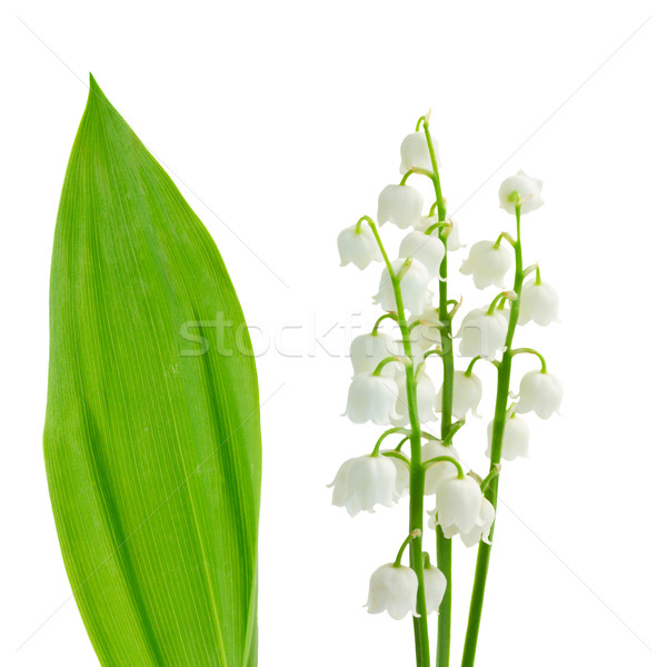 flowers and leaves of lilly of the valley Stock photo © neirfy