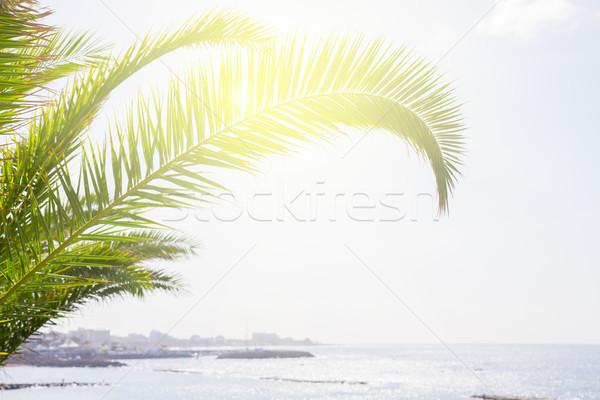 морской пейзаж пальма аннотация морем фон Сток-фото © neirfy