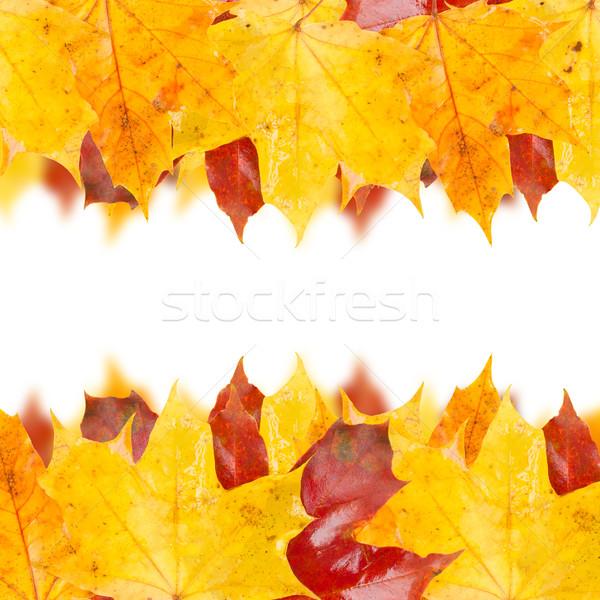 fall leaves Stock photo © neirfy
