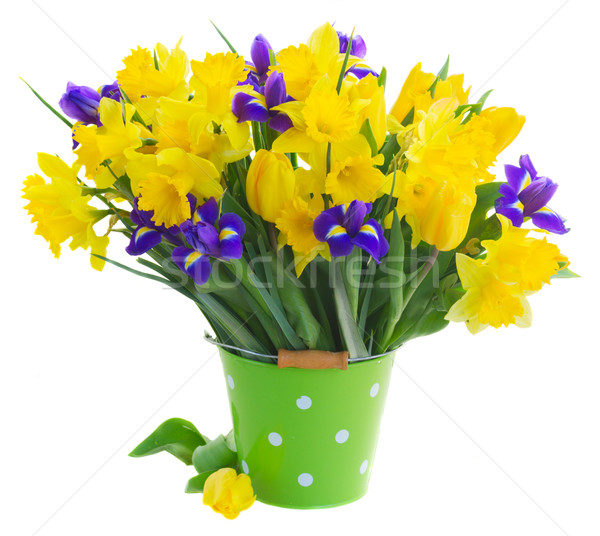 spring narcissus, tulips and irises Stock photo © neirfy