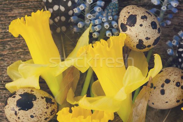 нарциссов яйца Daffodil цветы Сток-фото © neirfy
