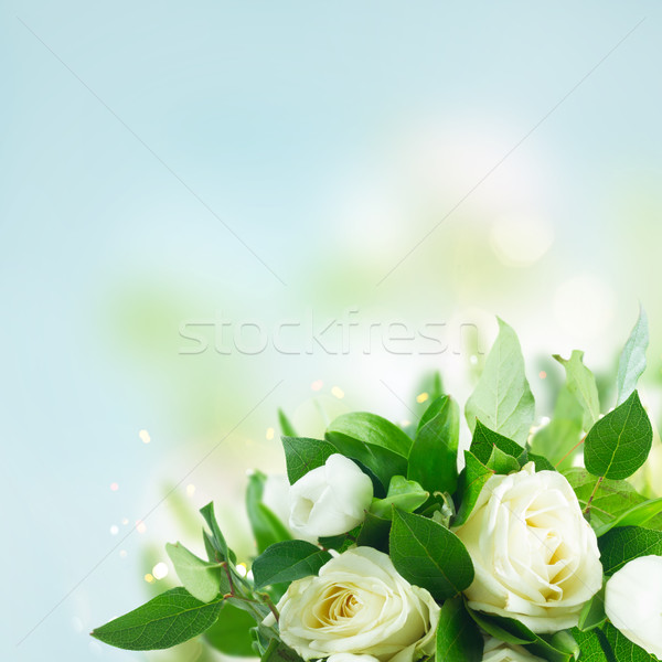 Photo stock: Bouquet · tulipes · roses · bleu · bokeh · fleur