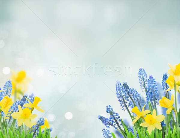 Spring bluebells and daffodils Stock photo © neirfy
