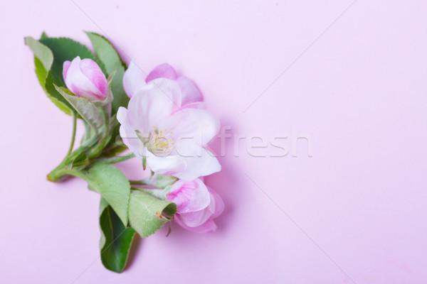 Bahar ağaç çiçekler elma ağacı dal Stok fotoğraf © neirfy
