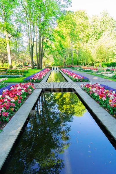 весны пруд парка свежие саду зеленый Сток-фото © neirfy