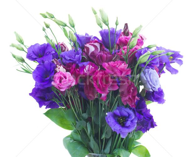 фиолетовый цветы розовато-лиловый изолированный Сток-фото © neirfy