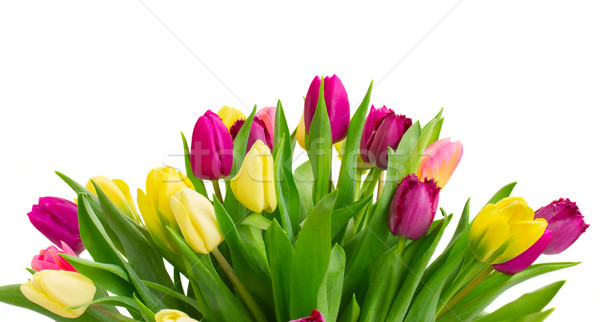 Ramo amarillo púrpura tulipán flores Foto stock © neirfy