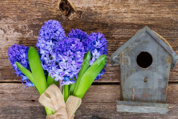 hyacinth flowers  and birdcage Stock photo © neirfy