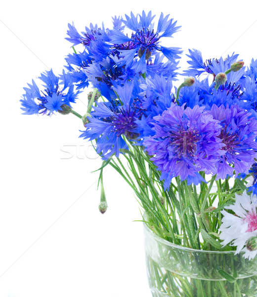 Stock photo: Blue cornflowers on white