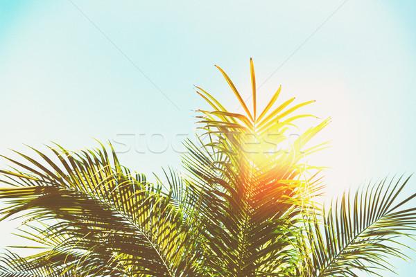 Palmeira folhas blue sky luz do sol retro sol Foto stock © neirfy