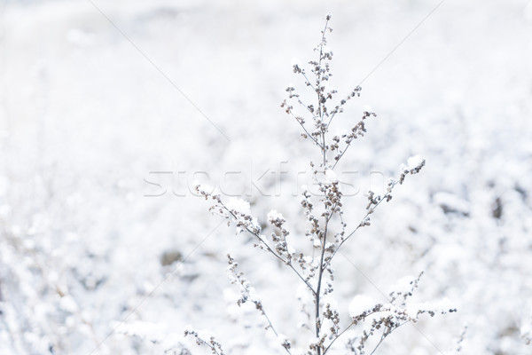 Winter landscape with snow Stock photo © neirfy
