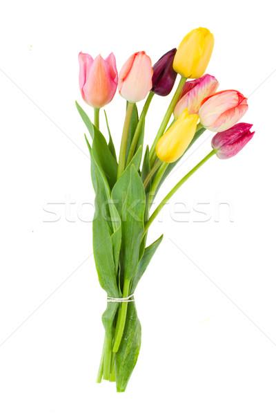 Posy of tulips flowers Stock photo © neirfy