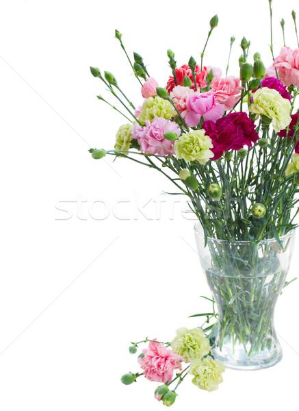 Haufen Nelke Blumen Glas Vase isoliert Stock foto © neirfy