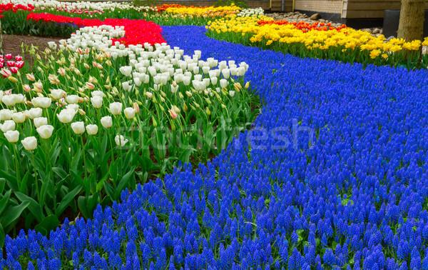 Blauw rivier bloemen holland tuin voorjaar Stockfoto © neirfy