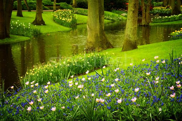 Voorjaar tuin Nederland kleurrijk rivier Stockfoto © neirfy