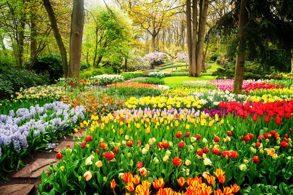 Formale primavera giardino colorato tulipani percorso Foto d'archivio © neirfy