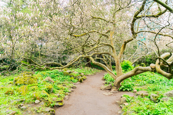 Bahçe manolya ağaç bahar yol yol Stok fotoğraf © neirfy