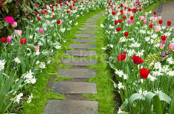 Stock photo: Stone walk way winding in a garden