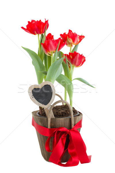 tulips for valentines day Stock photo © neirfy