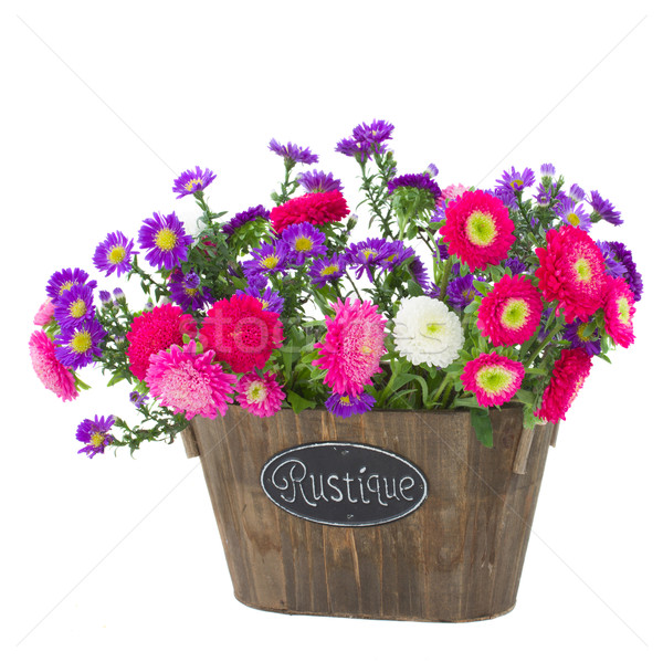bunch of  aster and mum flowers Stock photo © neirfy