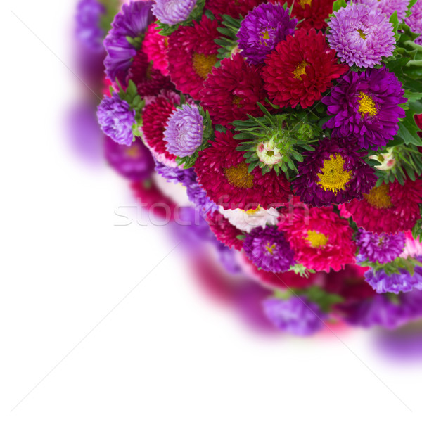 bouquet of fresh aster flowers Stock photo © neirfy