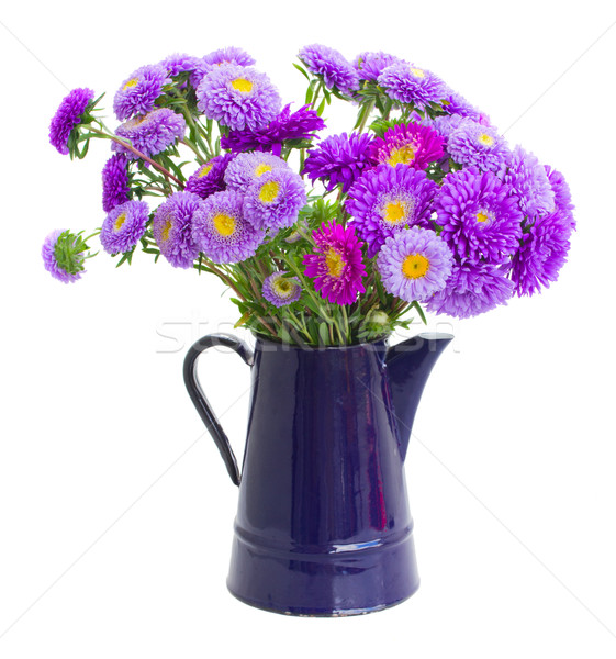 bouquet of violet aster flowers Stock photo © neirfy