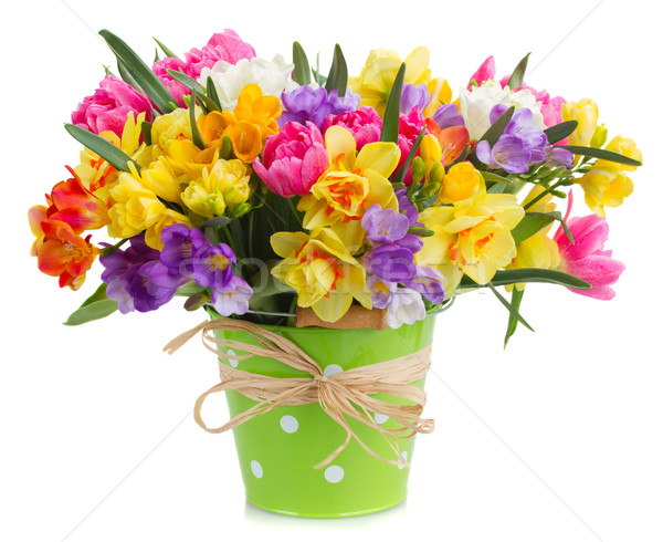 freesia and daffodil  flowers Stock photo © neirfy