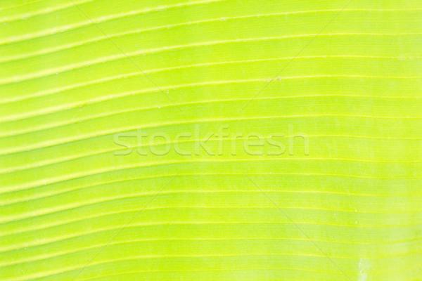Yeşil yaprak doku parlak damar makro arka plan Stok fotoğraf © neirfy