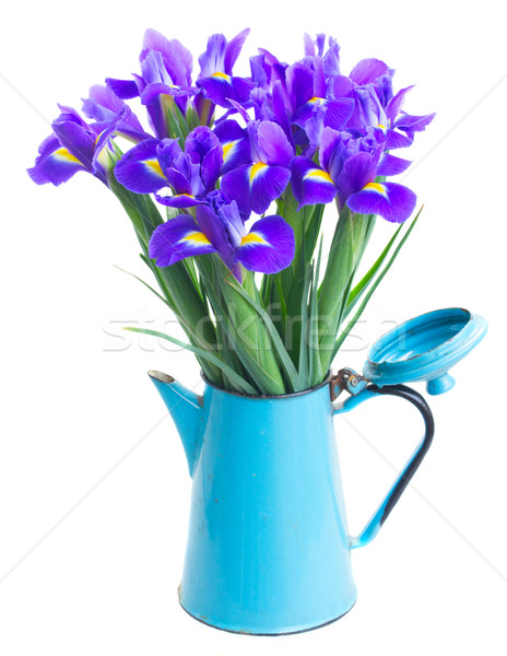 spring blue irises Stock photo © neirfy