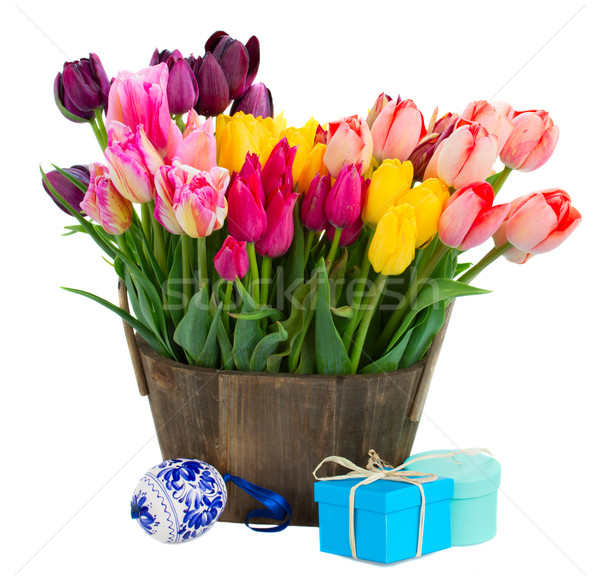 Colorful tulips on white Stock photo © neirfy
